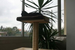 Sistema combinado NANO de CocoDiseño. Tienes gato?