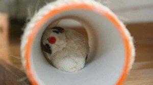 CocoDiseño construye juguetes divertidos para gatos