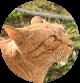 Garfield, editor de contenidos de CocoDiseño