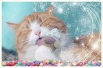 11 Alimentos prohibidos y 7 Plantas tóxicas para tu gato