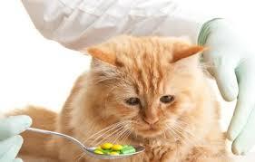 Gato medicado