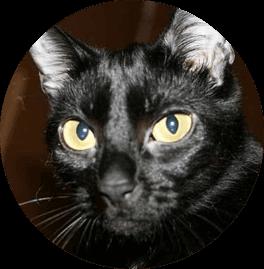 Lola, Betatester y probadora oficial de CocoDiseño