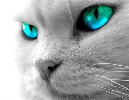 Mutaciones genéticas que hicieron al gato dócil
