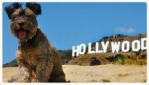 Perro en Hollywood