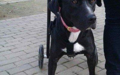 Terapia regenerativa en perros con parálisis