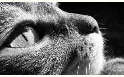 Lilith: la condena de los gatos Pyewackett