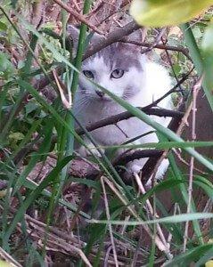 Los gatitos de Noelia