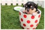 30 plantas tóxicas para tu perro (parte 1)