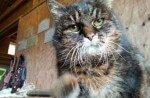 ¿El gato más viejo del mundo?