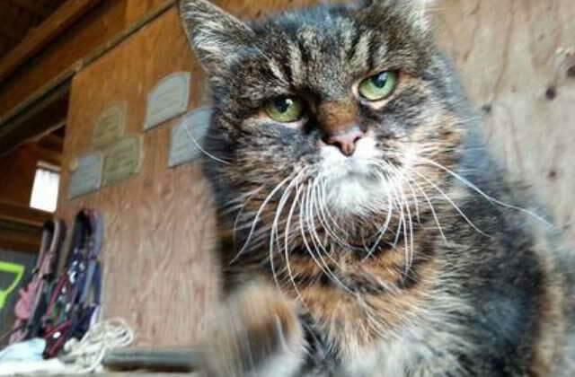 El gato mas viejo del mundo
