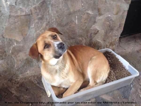 Kas, perro asesinado por un cazador hijode puta de Toledo