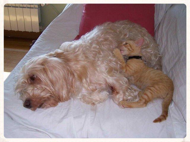 Convivencia de perros y gatos: una realidad posible