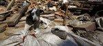Animales en el terremoto de Nepal