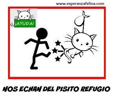 Esperanza Felina se queda sin refugio