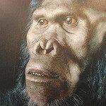 Homo Habilis, ancestro humano