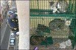 Bomberos arriesgan su vida para salvar 3 gatos que acaban sacrificados