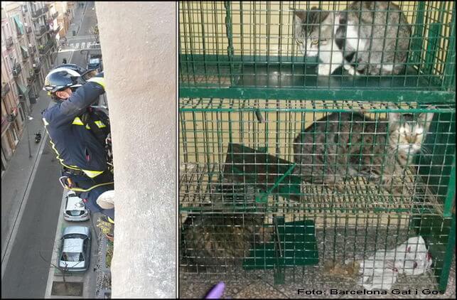 Bomberos rescatan gatos Barcelona