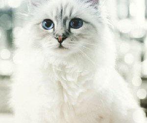 Choupette: La gata más rica del mundo