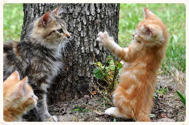 Leucemia felina, una lacra entre los gatos