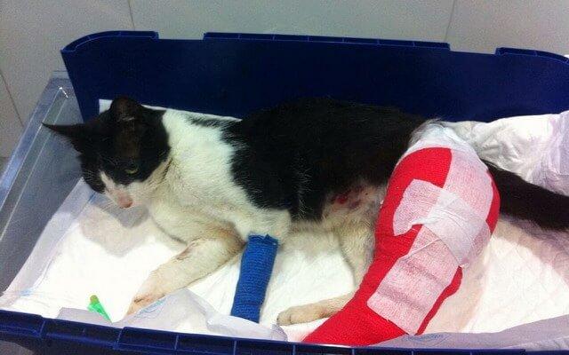 Nemo gato maltratado en Galicia
