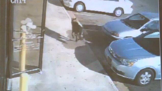 Perro salva a tres niños de un tiroteo… y fallece