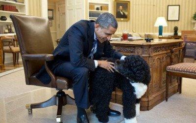 Presidentes, política y mascotas