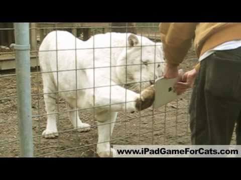 Videojuego para gatos