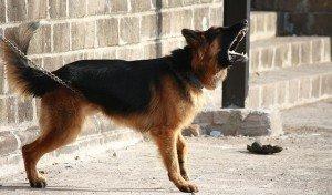 Los perros tiene un idioma propio