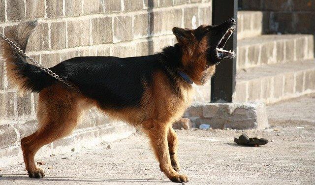 Traducen el lenguaje de los perros