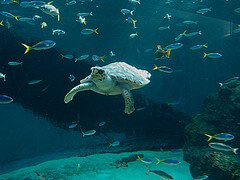 fish and turtle  photo