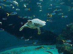 fish and turtle  photo