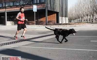 Canicross y los deportes de moda con tus mascotas
