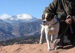 Firmas para apoyar al indigente al que le robaron su perro