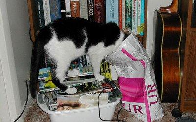 Olfato o vista? Qué usa antes tu gato para buscar comida?