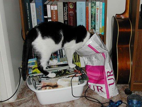 gato buscando comida