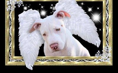 Una carta enviada desde el cielo de los perros revoluciona Internet
