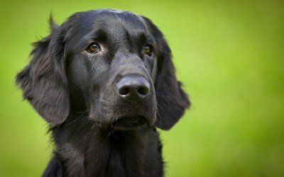 Un fotógrafo contra el síndrome del perro negro