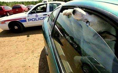Norteamérica se pone a la cabeza en leyes animales