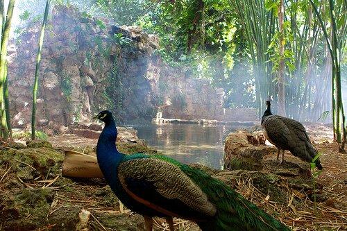 México, 475 especies en peligro de extinción