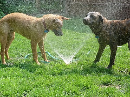 Dog sprinklers photo