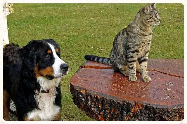 Alzhéimer en perros y gatos ancianos
