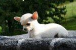 La cría selectiva en perros modifica su olfato