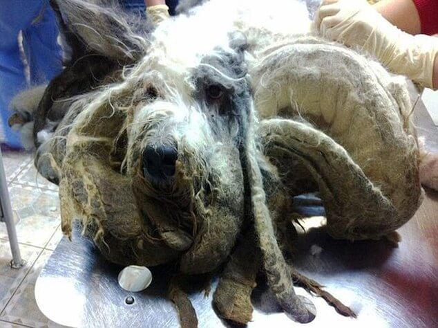 Coco, el perro que cuidó de la herencia y fue abandonado