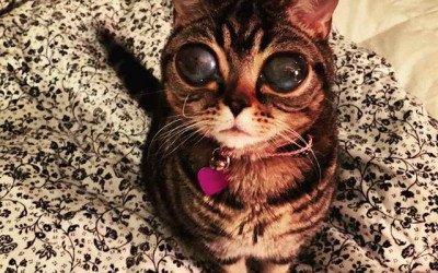 Matilda, la gata alienígena