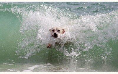 Golpes de calor en mascotas, prevención y cuidados