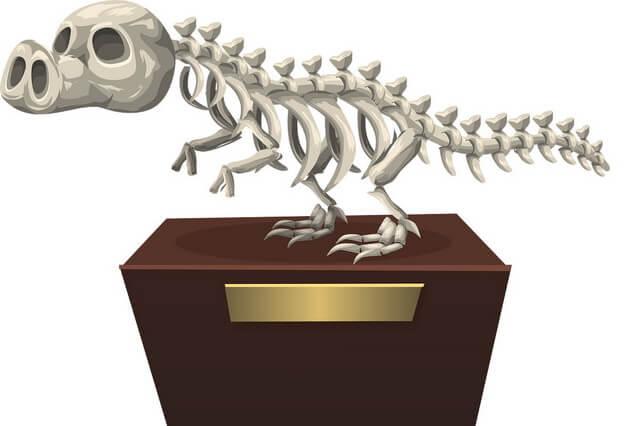 El último Solenodonte: Un extraño y único animal prehistórico aún vivo