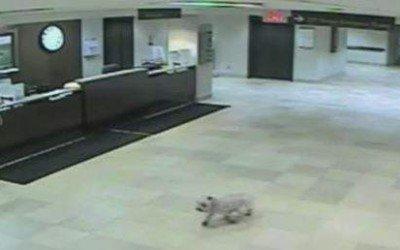 Sissy atraviesa media ciudad para ver en el hospital a su dueña