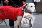 27000 perros estrenan casa: Éxito del programa adóptame