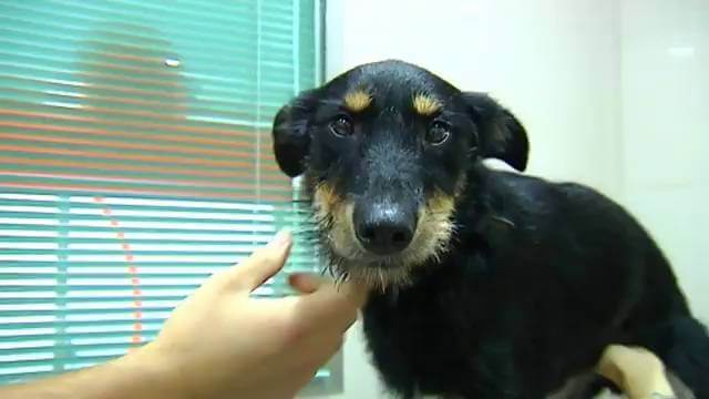 Barbita, en la clínica veterinaria tras ser rescatada del coche
