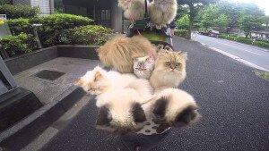 Gatos paseando por Tokio